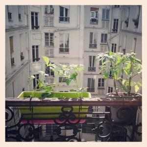 fraisiers jardiniere