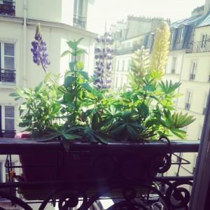 Le nain de balcon :)